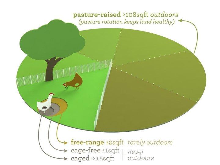 pasture raised vs free range vs cage free vs caged
